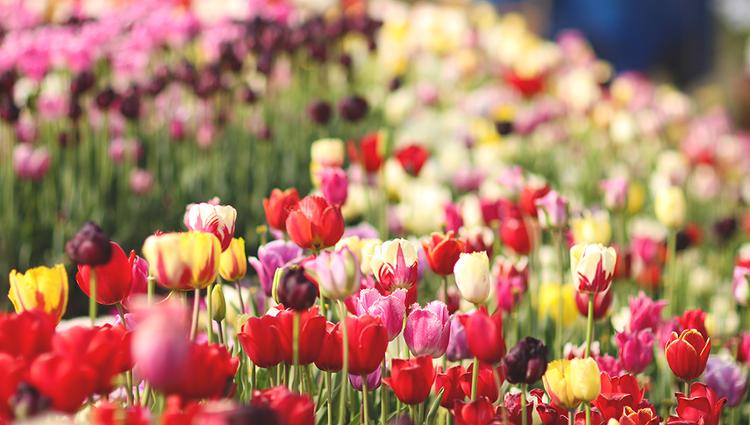 아직 알려지지 않은 숨은 꽃놀이 명소 찾기!