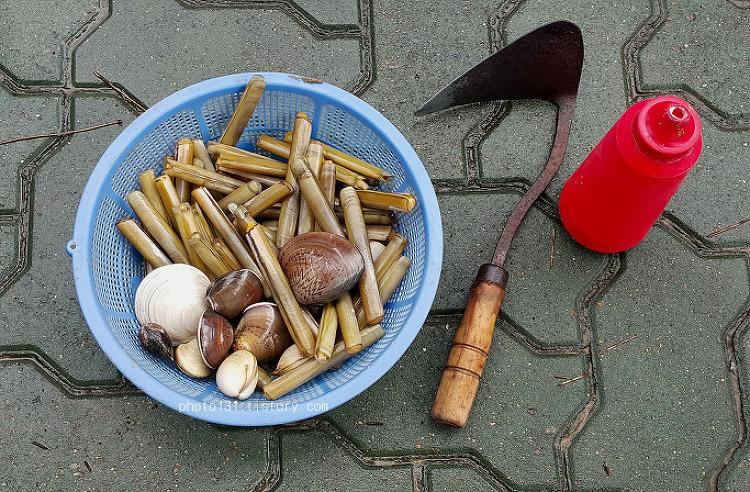 몽산포 해수욕장 조개 잡는 풍경, 맛 잡는 방법