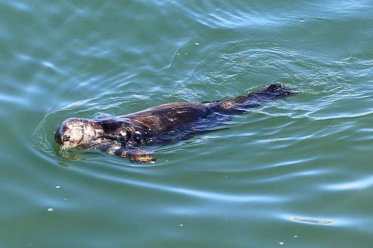 해달(sea otter)을 볼 수 있었던 몬터레이만(Monterey Bay) 북쪽 산타크루즈(Santa Cruz) 바닷가