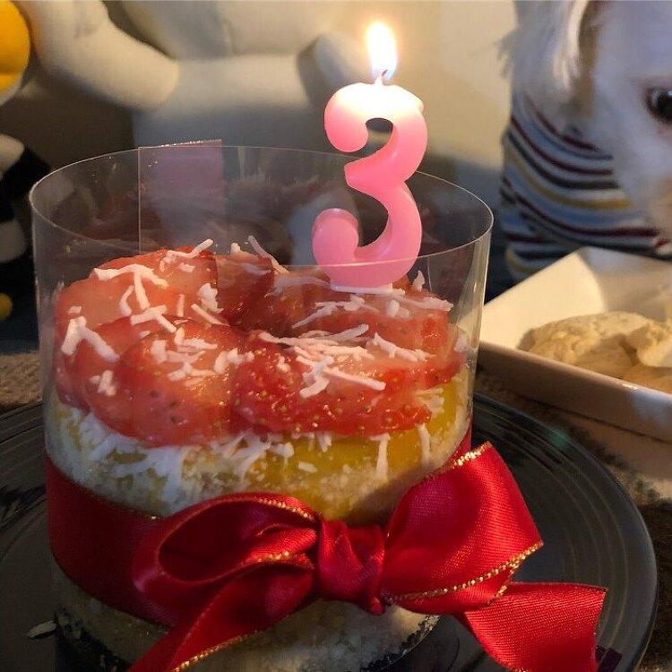 강아지생일 집에서 직접만든 케이크와 함께 추카추카추