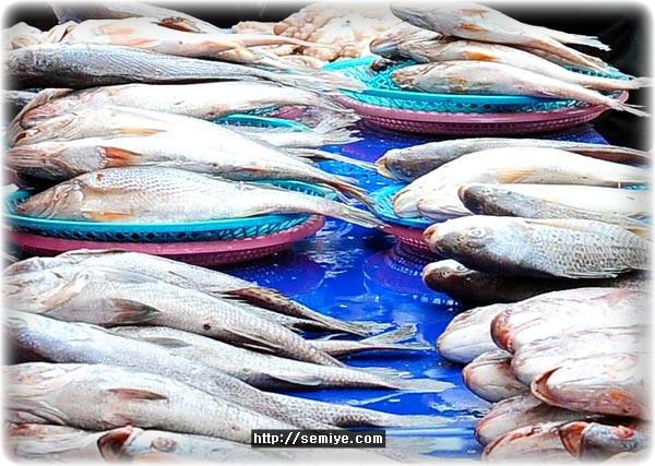 설-차례상-제수용품-생선-구정-신정-백화점-할인점-유통가-발품-전통시장-과일-쇠고기-돼지고기-배-명태-고등어-조기-생선-부세-참조기명태-한우갈비-닭고기-돼지고기-나물-고사리-시금치-도라지-취나물-사과-곶감-대추-밤-사과