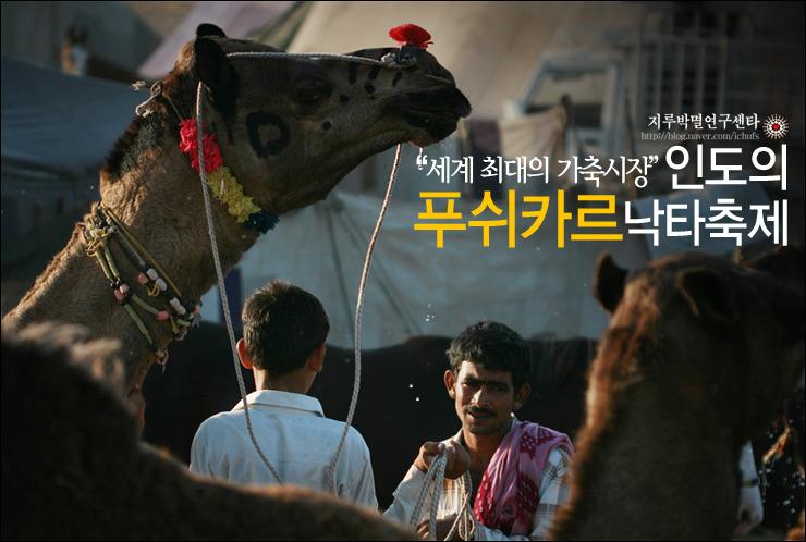 세계최대의 가축시장, 인도의 푸쉬카르 낙타축제