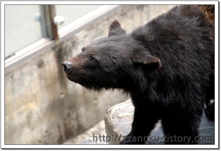 먹이를 기다리는 반달곰