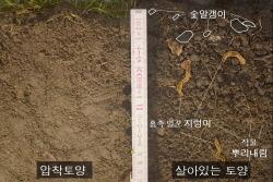 압축토양과 살아있는 토양
