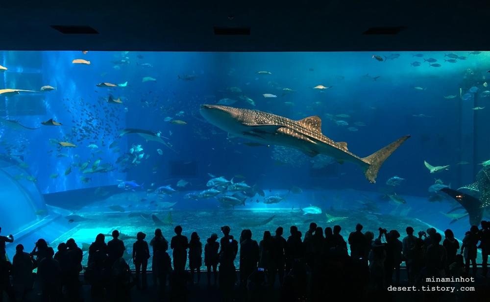 오키나와 여행 _ 해양박공원 / 츄라우미 수족관 (Okinawa Churaumi Aquarium)