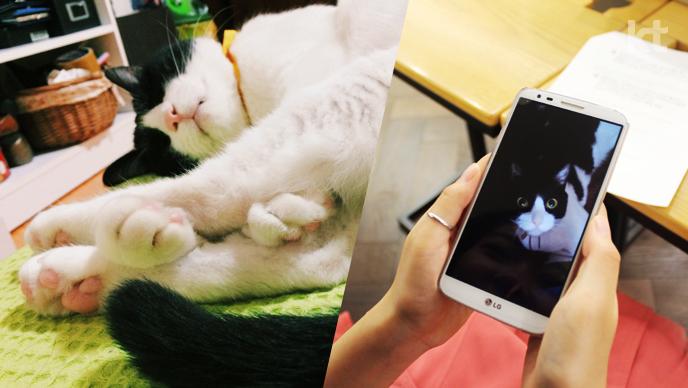 안의영 작가 고양이 꽁치
