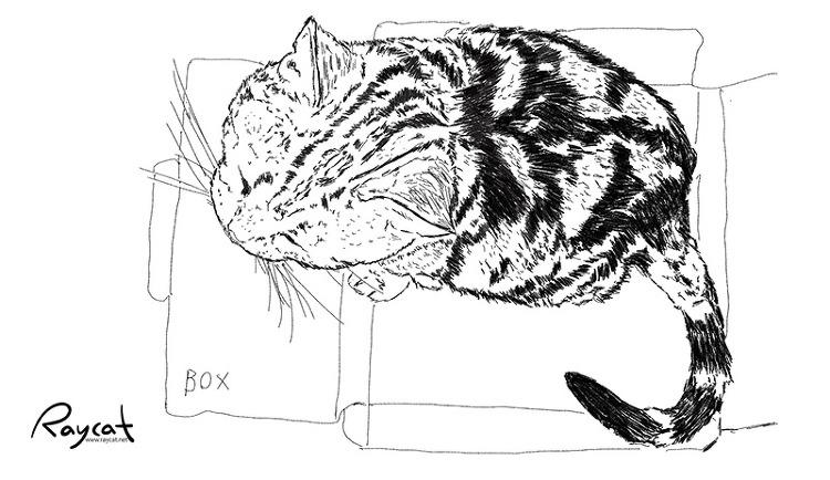 고양이 그림 3년째 스케치