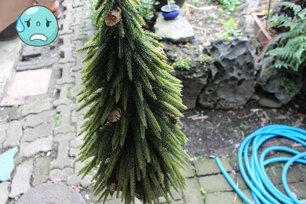 조화로 된 크리스마스 트리 오랫동안 사용하려면?