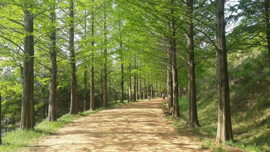 금강수목원