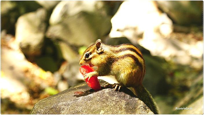 백운암을 올라가며 다람쥐와 함께 수박을 먹는다.::OmnisLog