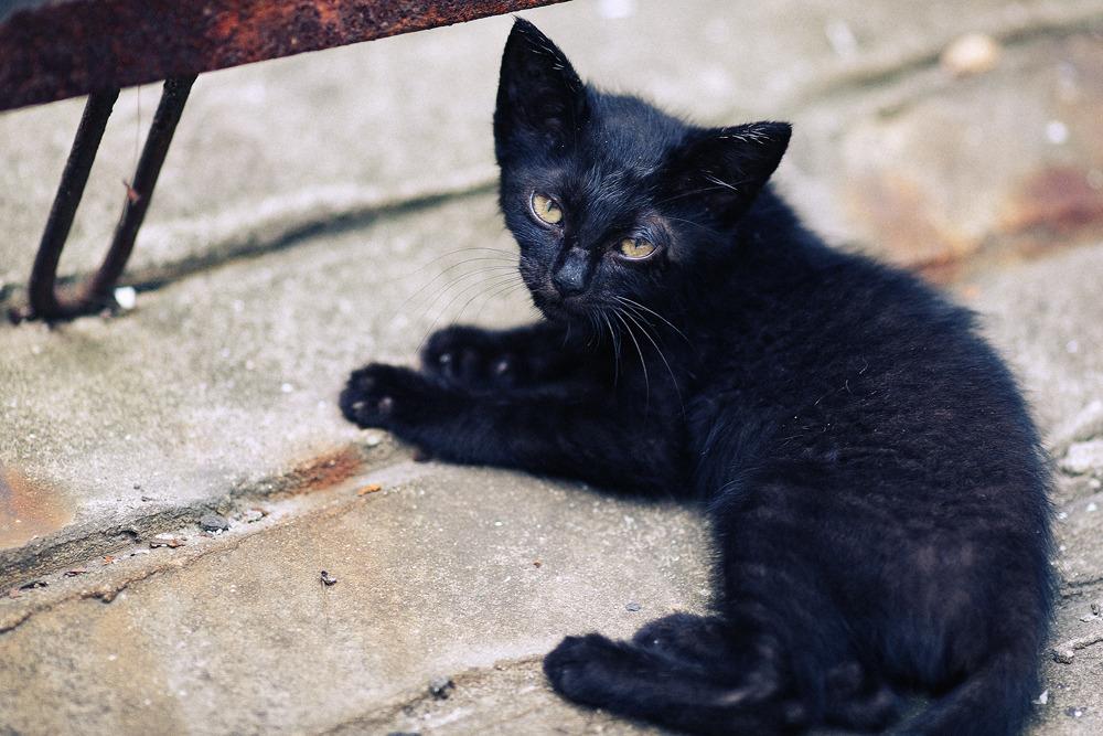 눈매가 매섭던 새끼고양이