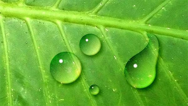 포토샵으로 사실적이고 생동감 넘치는 물방울(waterdrop) 표현하기