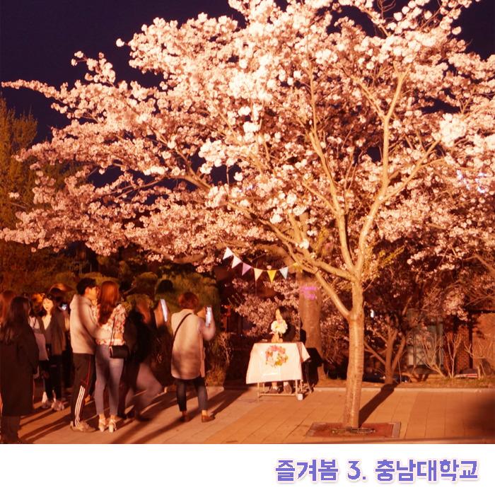 충남대학교 벚꽃축제