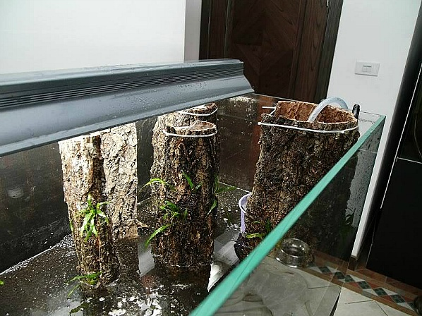 나무 껍질을 이용한 수조레이아웃