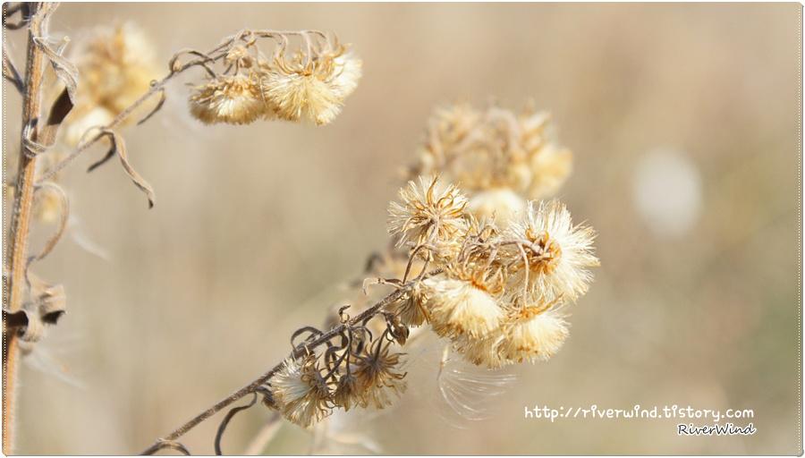 작은 풀꽃들의 솜털