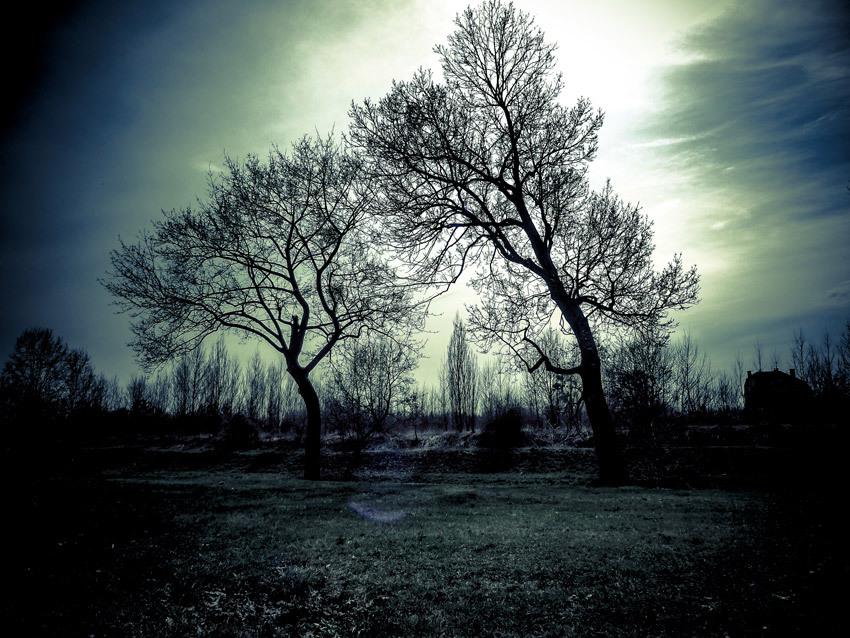 19 가지 나무와 풀(trees & grass) 실루엣 포토샵 브러쉬 - 19 Free Trees & Grass Brushes Photoshop Brushes