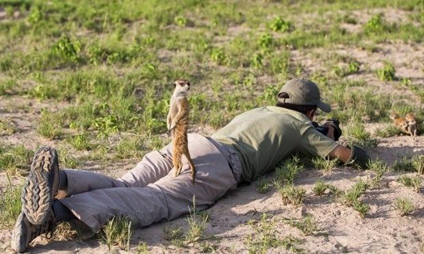 미어캣 사진