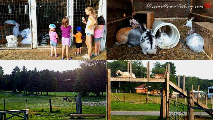 동물 가축 농장입니다
