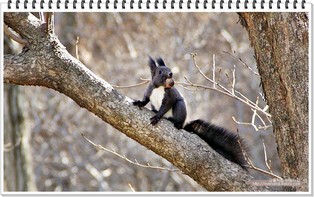 야생 청설모의 먹이먹는 모습