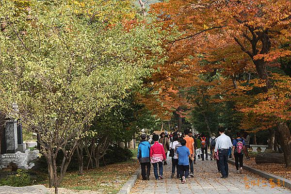 범어사, 단풍, 가을