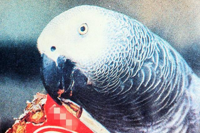반려동물 앵무새 타부
