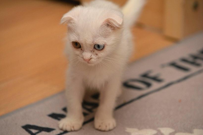 어린 고양이 장난감 뺏어버린 야웅군