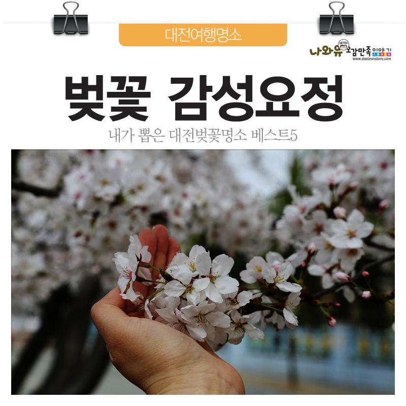 내가뽑은 대전벚꽃명소
