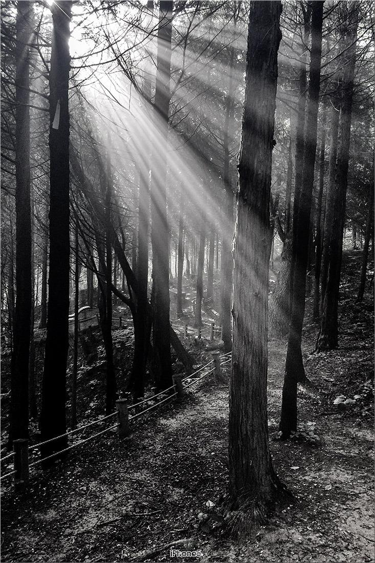 [iPhone5s] 숲속의 아침