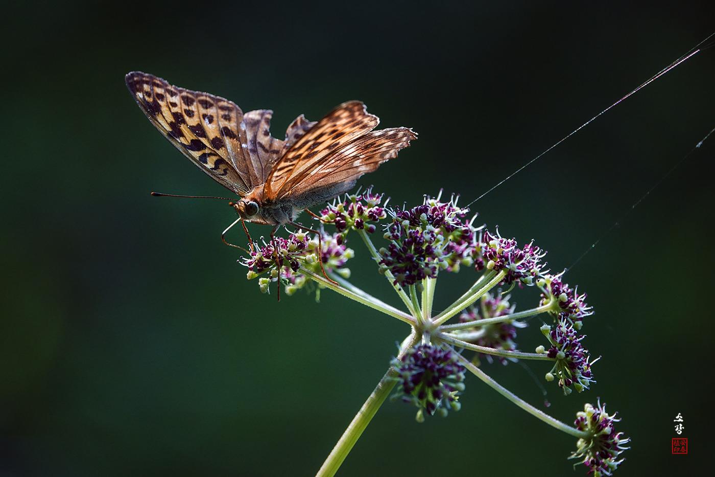 나비와 꽃 그리고 ...