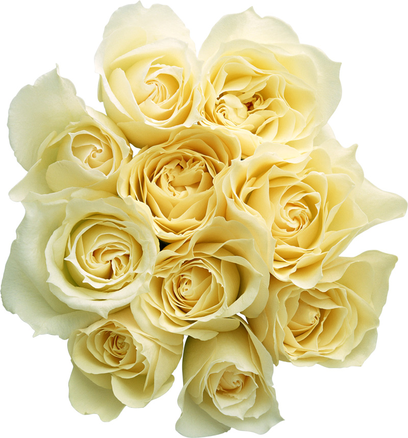 White Rose Png White Roses Png
